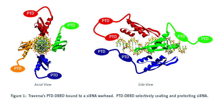 Patent Docs: Efficient Delivery of siRNA