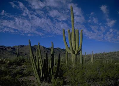 Arizona #3