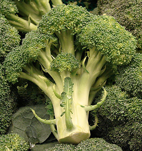 Brassica oleracea var. botrytis (Broccoli)